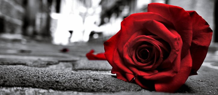 rose_sad_black_lost_love_emotions_flowers_life_road_floor_lonely_3840x2408.jpg